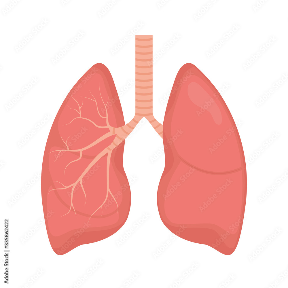 Fototapeta Lung human icon, respiratory system healthy lungs anatomy flat medical organ icon