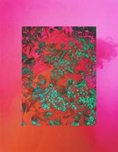 Plants Collage Color