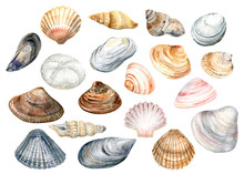 Clip Art Set With Colorful Shells On A White Background . Cute Stock  Illustration. Hand Painted In Watercolor