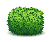 Vector Garden Bush Isolated Sh...