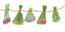 Watercolor Hand Painted Dried Clover, Eucalyptus, Lavender, Arnica, Wormwood, Oregano, Yarrow Herb Plants Bouquets On The Rope Composition On The White Background For Design Elements
