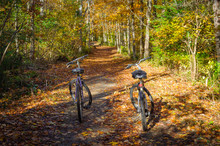 Two Bikes On Path In The Woods During Autumn