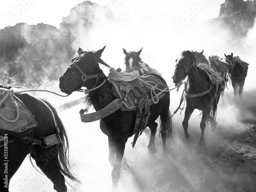 Obraz na plátně horse