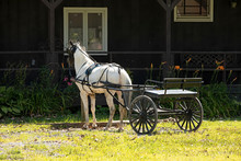 White Horse And Cart Amish Home Ohio. Old Amish Mennonite Settlement. Rural Old Order. Farming Landscape And Business. Despain Rekindle Photo.