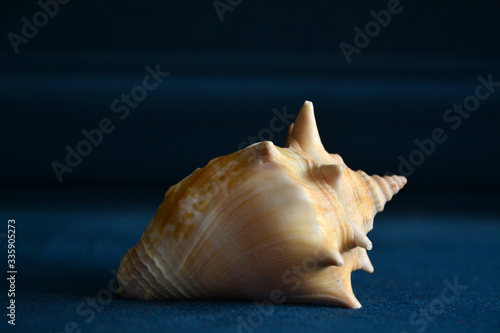 Fotografía Concha do mar com fundo azul