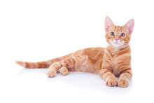 Happy Ginger Cat Laying Down O...