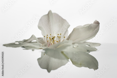 A blossom flower in water with a reflection on minimalist bright background Wallpaper Mural