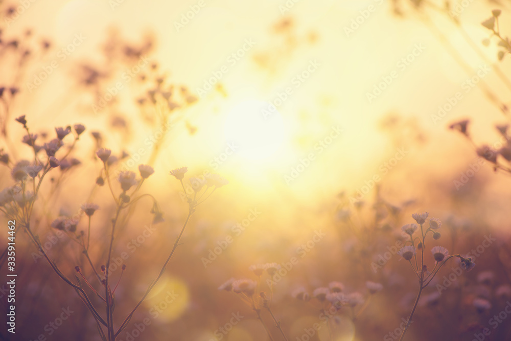Fototapeta Nature backdrop. Beautiful Meadow with wild flowers over sunset sky. Beauty nature field background with sun flare. Easter nature backdrop. Bokeh, Silhouettes of wild grass and flowers