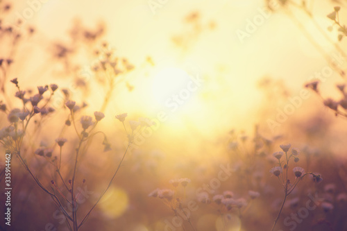 Obraz Nature backdrop. Beautiful Meadow with wild flowers over sunset sky. Beauty nature field background with sun flare. Easter nature backdrop. Bokeh, Silhouettes of wild grass and flowers - fototapety do salonu