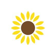 Sun Flower Illustration Vector