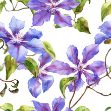 Watercolor Seamless Pattern With Hand Painted Clematis Flowers Isolated. Stock Illustration. Fabric Wallpaper Print Texture.