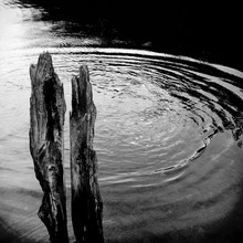 Remnants Of A Timber Wharf Stick Out Of The River Derwent Near Hobart, Tasmania