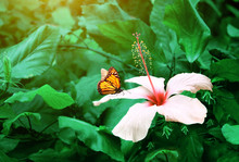 Beautiful Tropical Scene With Exotical Flower And Butterfly