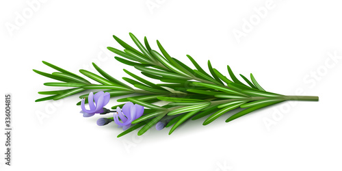Foto Sprig of fresh flowering rosemary isolated on a white background
