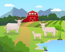 Vector Illustration Of A Farm With Green Field And Blue Lake, Garner, And Trees With Goats Family On It.