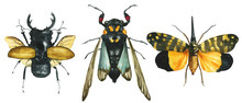 Set Of Watercolor Painted Tropical Exotic Beetles And Butterflies (odontolabis, Tosena,) Isolated On White Background Entomological Realistic Drawing. For The Design Of Poster, Textile, Print. Unusual