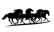 Herd Of Wild Mustang Horses Ru...