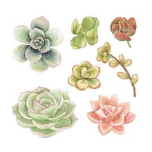 Watercolor Set Of Succulents For Your Design, Hand Drawn Vector Illustration.