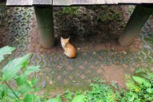 Cute Orange Striped Cat Enjoy ...