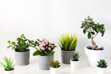A Large Group Of Potted Plants...