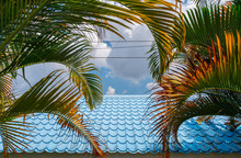 Green And Yellow Palm Leaf With Blue Sheet Metal Roofs And Sky Background.