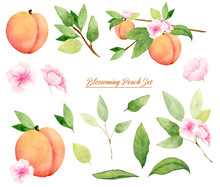 Set Of Blossoming Peach Tree A...