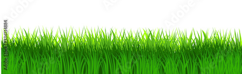 Obraz Grass field isolated vector. Green dense juicy lawn grass. Spring Summer. Isolated. Grassland landscape. Meadow. Horizontal Herbs Garden. - fototapety do salonu
