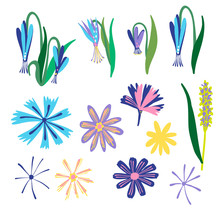 Vector Isolated Set Of Colourful Spring Colchicum And Chicory Flowers On A White Background. The Design Is Perfect For Decorations, Logo, Invitations, Stickers, Tattoos And Cards.