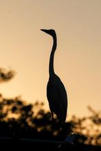 Florida Keys Pelicans And Aqua...