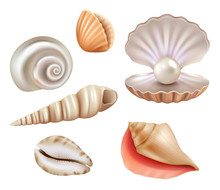 Open Seashells. Luxury Pearls ...