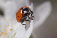 Close Up Of Ladybug Sitting On...