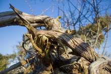 Dry Driftwood Lies On The Grass