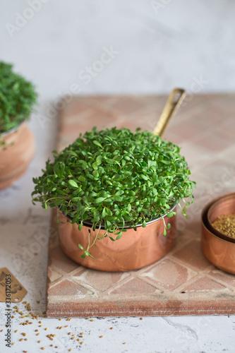 Photo Alfalfa microgreens