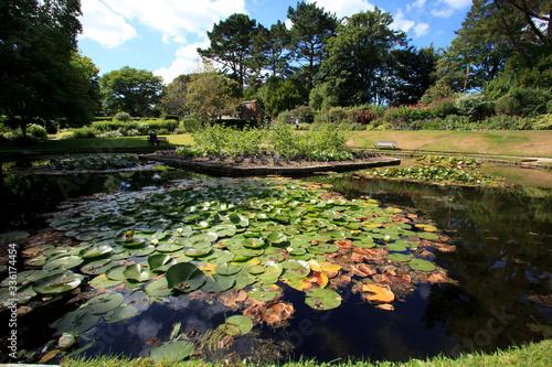 Saltash (England), UK - August 21, 2015: A small lake in Cotehele park, near Saltash,  Cornwall, England, United Kingdom Wallpaper Mural