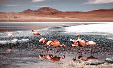 Fototapeta Zwierzęta Pink flamingos at exciting lagoon scenery