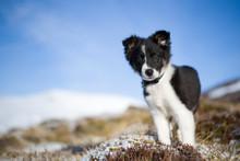 Scotland, Genshee, Portrait Of...