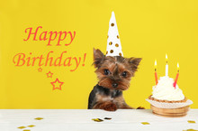 Text Happy Birthday, Yorkshire Terrier Dog And Delicious Cupcake On Yellow Background