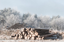 Pile Of Timber Logs In A Frosty Landscape