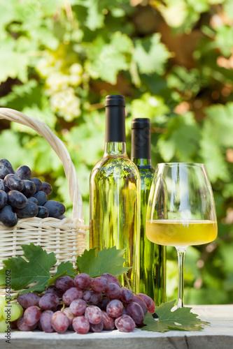 Fototapeta Colorful grapes and white wine
