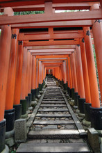 Rows Of Torii Gate Lasted Quit...