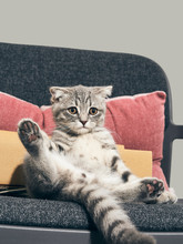 Comfy Cat On The Armchair