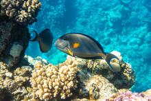 Tropical Fish In The Ocean Nea...