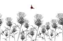 Seamless Pattern Field Herbs A...