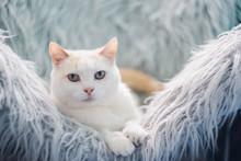 White Cat Relaxing.