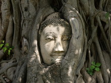 Buddha Head Entwined In Tree Roots Located In Wat Mahathat, Ayutthaya, Thailand
