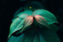 Colorful Exotic Plant Against ...