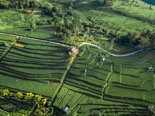 Aerial View Of Rice Fields In Penebel During Sunset, Bali, Indonesia.