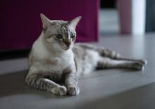 Portrait Of A Cute Cat Sitting...