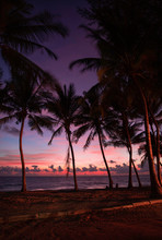 Beautiful Pink Sunsets At The Beach