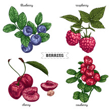 Set Of Hand Drawn Berries Isolated On White Background. Raspberry, Blueberry, Cherry, Cowberry On White Background.  Fruit Botany Illustration.